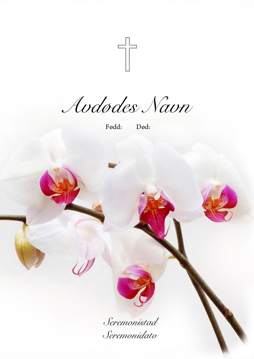 3013 Orkide hvit