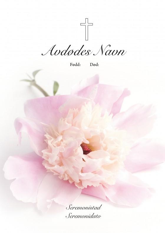 4010 Pion blomst