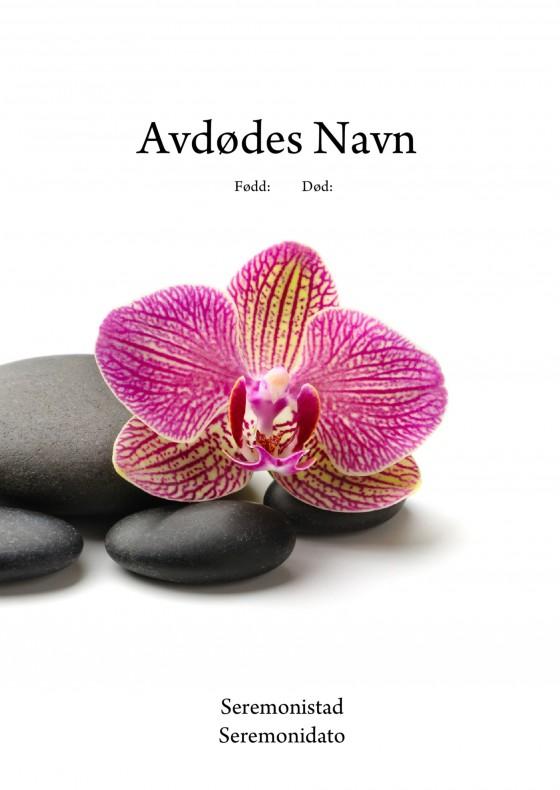 4123 Stener og orkide1